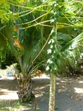 Casa Fruta Pão - Jardin - Papaye